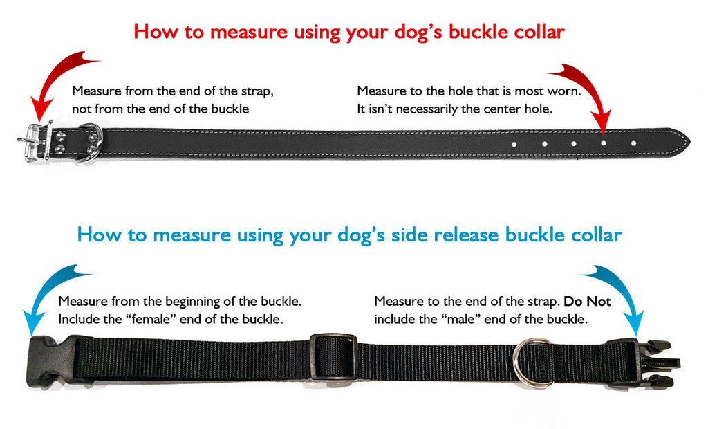 OH MY DOG Polyester Webbing Dog Collar with Laser Engraved Personalized Buckle - Flying Dog Collars