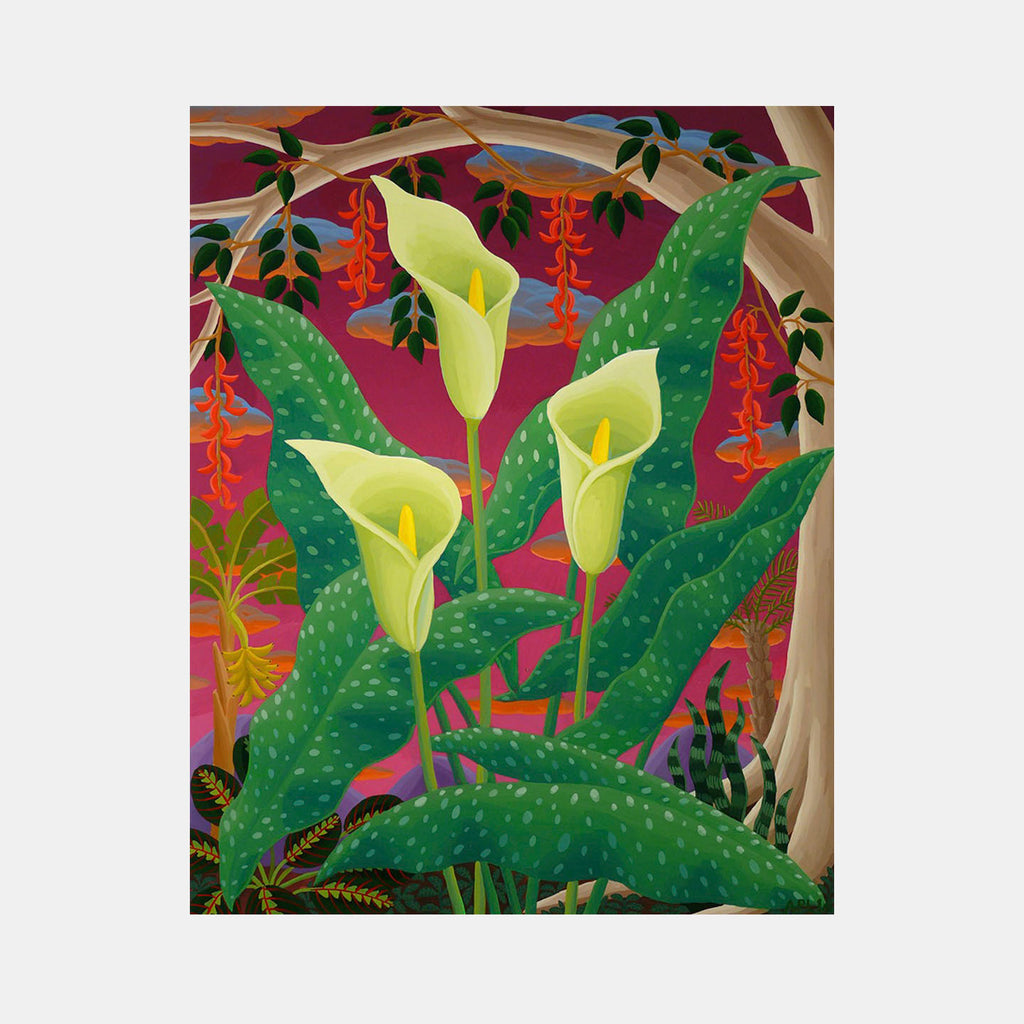 Spotted Calla Lily by Amy Lincoln
