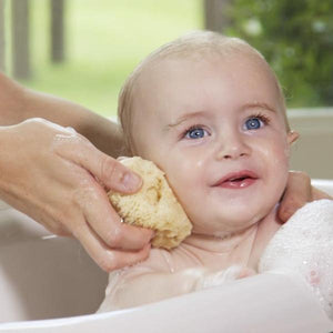 sea sponge for washing baby