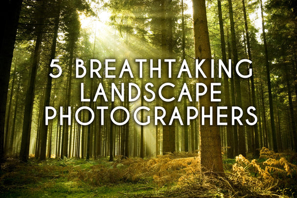 5 breathtaking landscape photographers with a bright green forest sunlight