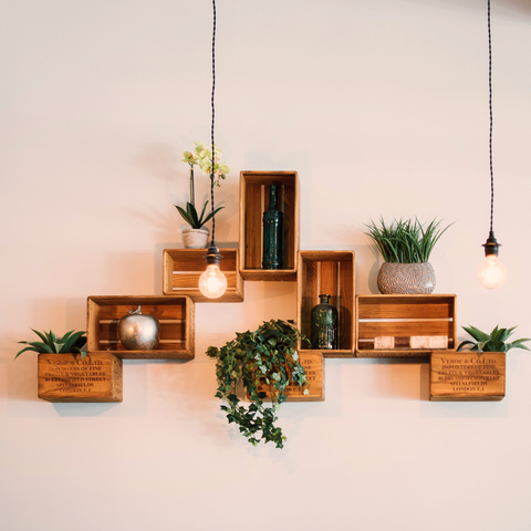 plants in wooden boxes on wall