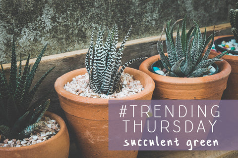 Trending Thursday succulent green tiny potted plants