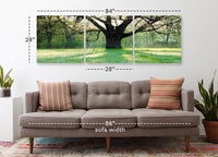 Blossoming Oak Tree <h2>Frameless 3 Panel Nature Landscape Photography Print</h2>