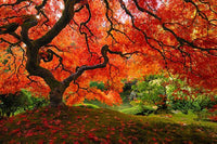 Japanese Maple (Large) - Photography Print on Canvas - Canvas Panoramic Wall Art
