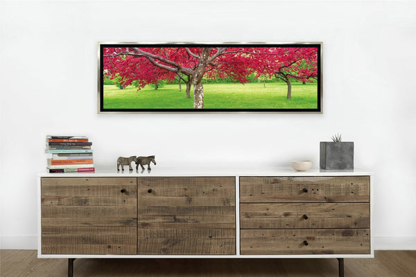 Cherry Blossoms Tree Framed <h2>Framed Nature Landscape HD Vinyl Photography Print</h2>