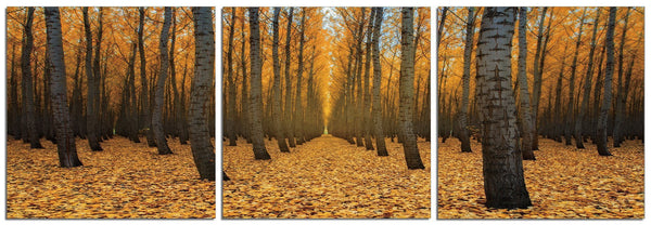 Autumn Path <h2>3 Panel Nature Landscape Vinyl Photography Print</h2>