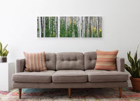 Aspen Trees <h2>Frameless Nature Landscape Canvas Photography Print</h2>