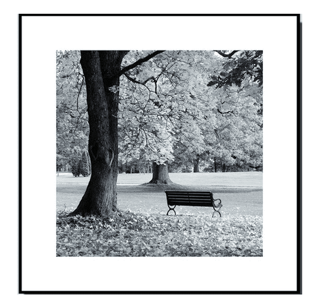 Park Bench #1: Framed Black and White Photography Print