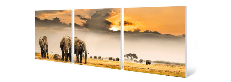 products/african-wildlife-elephant-photography.jpg
