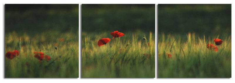 products/amapolas-poppies-nature-photo-print_3ce1b0a5-32ea-425f-bebe-d9763b6443dd.jpg