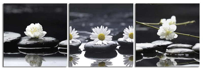 products/daisies-on-the-rocks_443124d0-c38e-43c6-948d-dd52632d56a3.jpg