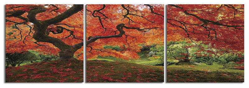 products/japanese-maple-portland-photo_39248432-14fd-4e86-8d7f-c54500bf29a3.jpg