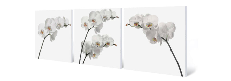 products/white-orchids.jpg