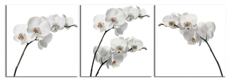 products/white-orchids_de0250db-9f32-4912-85c5-f7f982a6ae49.jpg