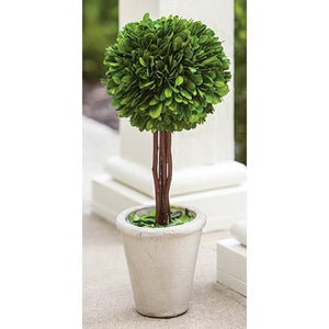 Boxwood Topiary 16""