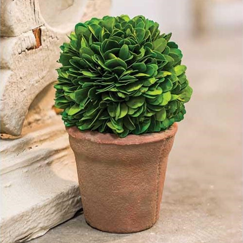 Potted Boxwood Ball 6.5""