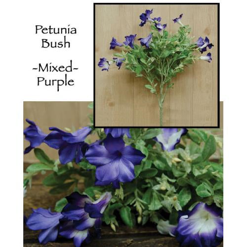 *Petunia Bush   Purple