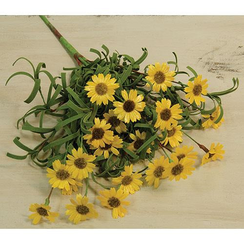 Mini Mountain Daisy Bush Yellow