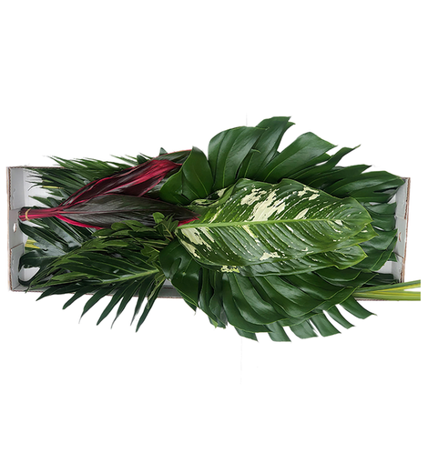 AMAZON BOX | TROPICAL FLOWERS