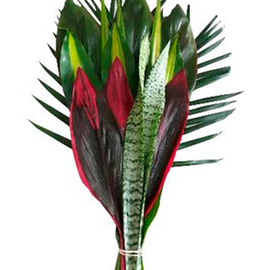FOLIAGE REINA BUNCH | TROPICAL FLOWERS