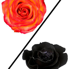 HIGH MAGIC & DYED BLACK | ROSES