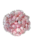 HYDRANGEAS DYED LIGHT PINK SELECT - Price per stems $1.20