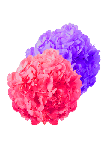 HYDRANGEAS MIX DYED LAVENDER & DYED HOT PINK PREMIUM - Price per stems $1.59