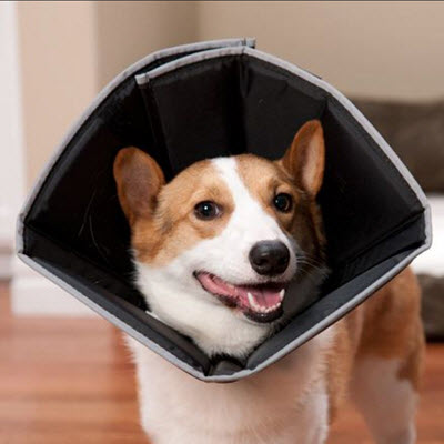 Comfy Cone Collars for Dogs Cats Pets