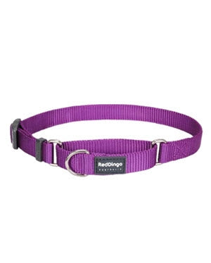 Red Dingo Martingale Half Check Collar in Purple