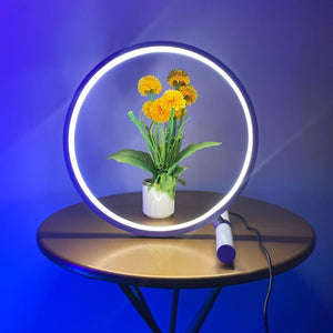 Circu Table Lamp Xeno Designs