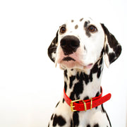 CANDY CANE COLLECTION COLLAR | RED