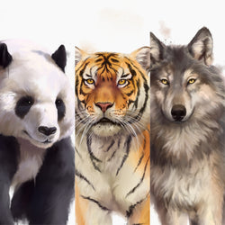 Your favorite animals Collection