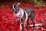 Reversible Dog Harness - PRETTY IN PINK - TopDog Harnesses