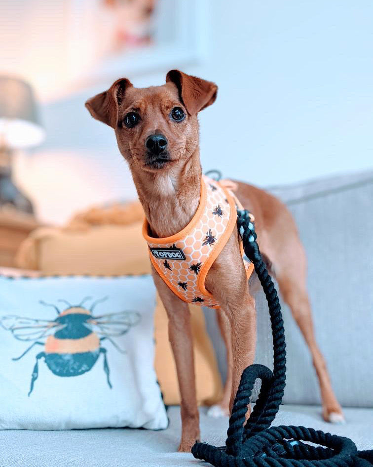 Reversible Dog Harness - BEE KIND