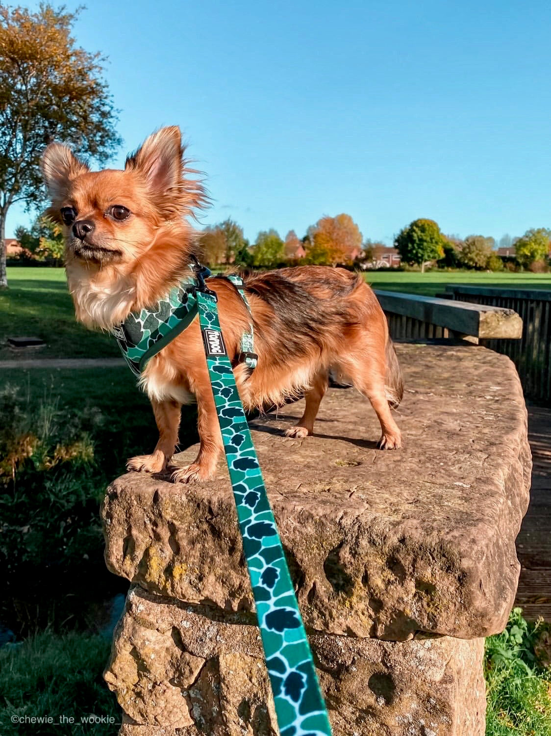 Matching Lead - BeLeaf in Yourself - TopDog Harnesses