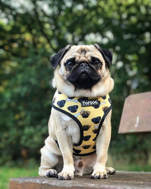 Reversible Dog Harness - GIVE A DOG A BONE - TopDog Harnesses