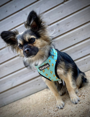 Reversible Dog Harness - LITTLE HERO - TopDog Harnesses