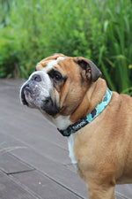 Dog Collar - BeLeaf in Yourself - TopDog Harnesses