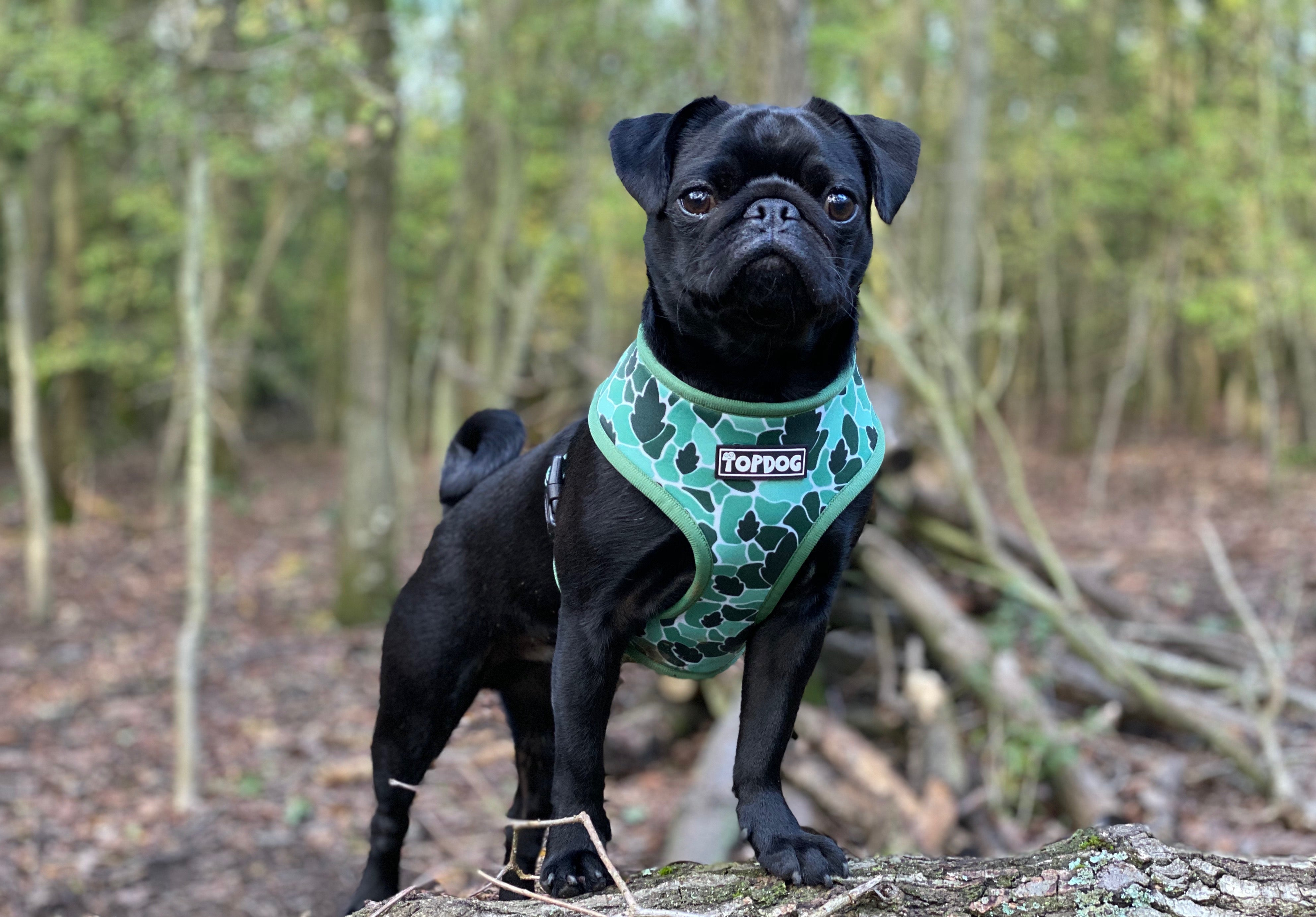 Reversible Dog Harness - BeLeaf IN YOURSELF - TopDog Harnesses