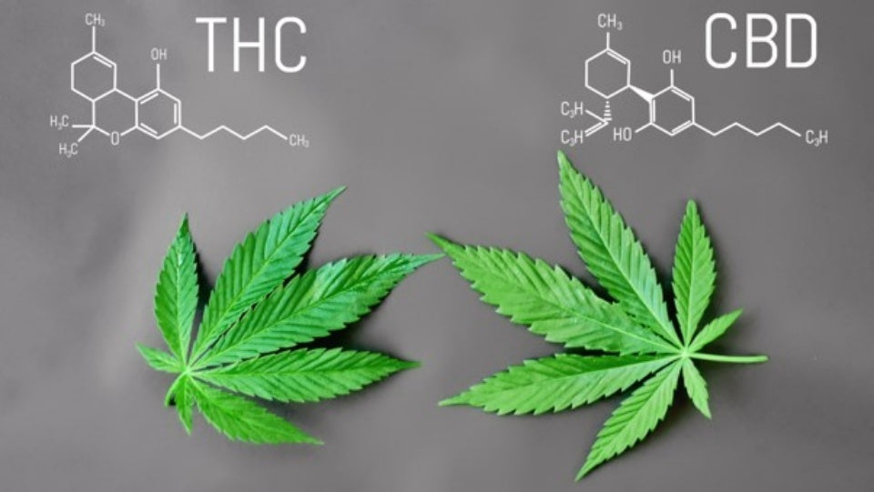 THC vs CBD: Knowing the Difference