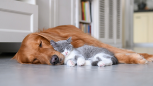 HAVE YOU EVER WONDERED WHAT YOUR PET DREAMS ABOUT?