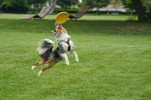 SPORT WITH YOUR PET
