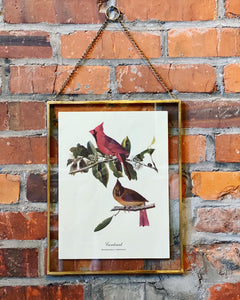 Framed Bird Botanical Print