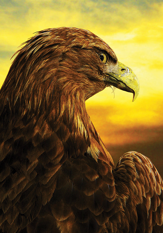 Photo Birds: The Great white-tailed Eagle - top quality approved by www.postcardsmarket.com specialists
