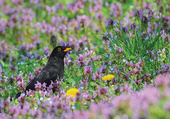 Photo Birds: Purple Spring - top quality approved by www.postcardsmarket.com specialists