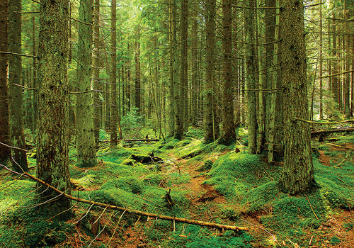 Photo: Virgin Forest - UNESCO list like - top quality approved by www.postcardsmarket.com specialists