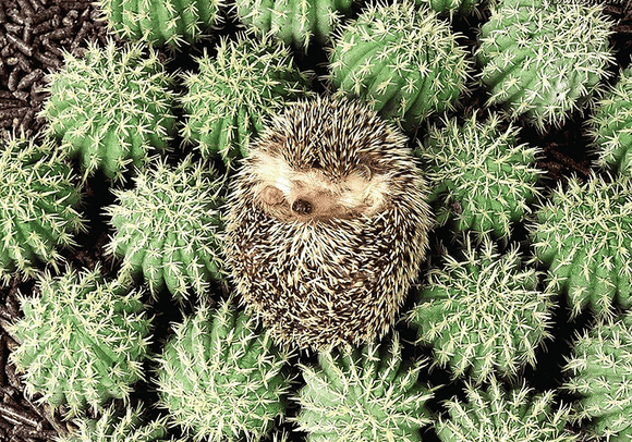 Photo: Hedgehog - Camouflage - Postcards Market