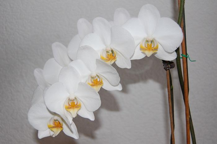 Photo Flowers - Amazing Nature - Orchid Passion 11 x 5 pcs - top quality approved by www.postcardsmarket.com specialists
