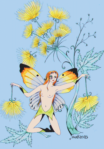 Drawings: 5x ARNICA Fairy - top quality approved by www.postcardsmarket.com specialists