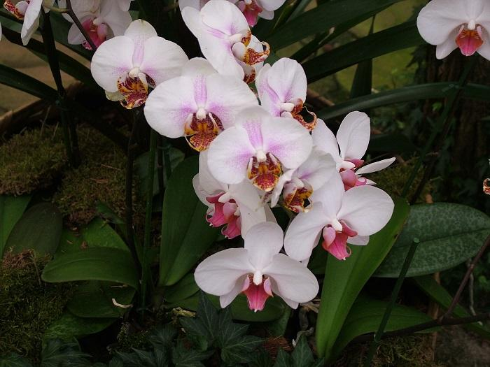 Photo Flowers - Amazing Nature - Orchid Passion 14 x 5 pcs - top quality approved by www.postcardsmarket.com specialists